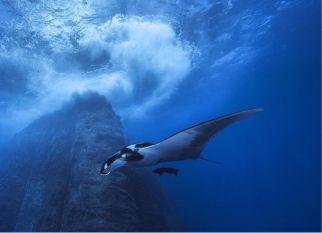 """O México cria uma vasta reserva oceânica para proteger  as  ilhas Revillagigedo, conhecidas como """"Galápagos da América do Norte"""". Confira!"""