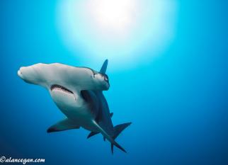 Lindas fotos do fotógrafo Alan C. Egan, desses animais tão fortes e ao mesmo tempo tão ameaçados. Confira!