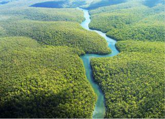 """73 milhões de árvores serão plantadas ao longo de 6 anos na nossa Floresta Amazônica pela """"Conservation International"""". Confira!"""