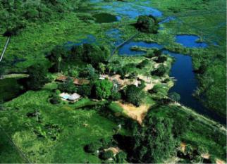 ARARAS ECOLODGE – Pantanal (Poconé) –   Uma opção para os que gostam de se integrar à  natureza, à vida selvagem,  para os apaixonados pela observação de pássaros  e outros animais, para os que valorizam a vida  e a preservação da vida …. Confira!