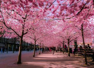 Um estudo realizado na Inglaterra indica que londrinos que moram em ruas arborizadas, tomam menos antidepressivos.