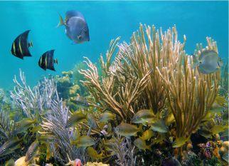 """Barreira de corais de Belize se recupera e é removida da lista """"Em perigo"""" da UNESCO. É uma boa e inspiradora notícia. Confira!"""