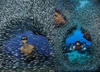 Pequenos peixes se reúnem em cavernas subaquáticas nas Ilhas Cayman, para se protegerem dos seus predadores. Confira!