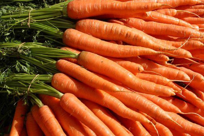 cenoura 1