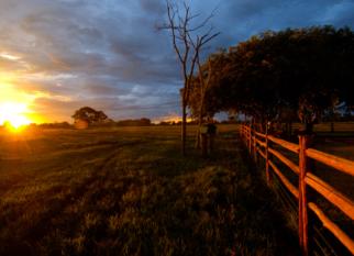 Pousada Aguapé (Mato Grosso do Sul – Pantanal) -   Uma atmosfera acolhedora, cuidados especiais , conforto, segurança...   Enfim, um ambiente perfeito para que possamos desfrutar as emoções que o Pantanal nos oferece a cada minuto. Vamos somar  à essas emoções, os prazeres da vida na fazenda - tomar o leite fresquinho no curral, conviver com os pantaneiros na lida com o gado, saborear as delícias do pantanal .... Irresistível!     Estamos falando da POUSADA AGUAPÉ. Vamos saber um pouco mais desse lugar tão especial! Confira!
