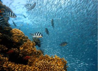 Efeitos do aquecimento global nos oceanos é pior do que se pensava! Confira!
