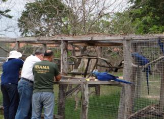 Lá no Pantanal ... Projeto reintegra à natureza, mais de 300 aves apreendidas em cativeiros e operações contra tráfico de animais. Confira!