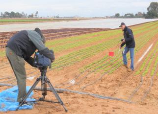 Sistema  de irrigação inteligente e  gestão de água de baixo custo é capaz de poupar 40% da água na irrigação.