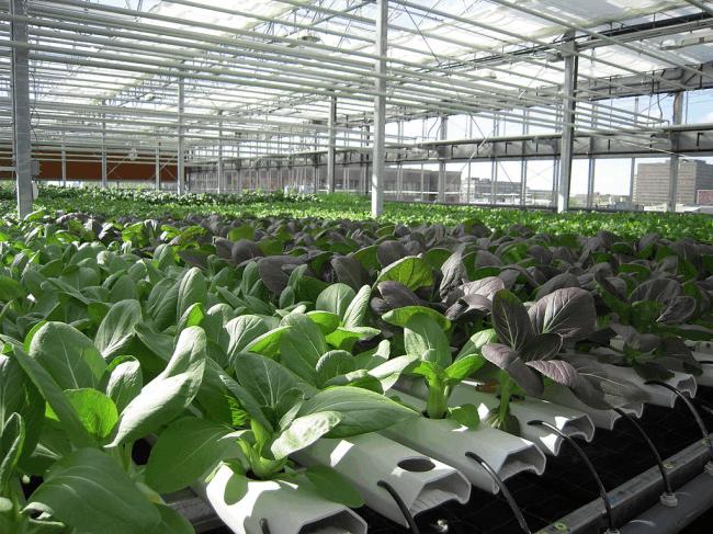 lufa farm 4