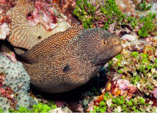 Nova Caledônia, arquipélago no Pacífico com a segunda maior barreira de corais do mundo.