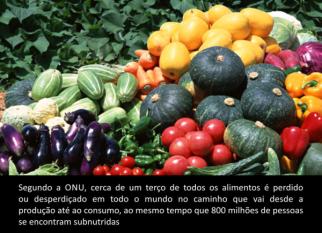 ONU lança padrão global para medir perda e desperdício de alimentos. Confira!