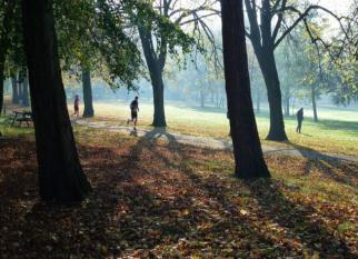 Cidade inglesa combate as mudanças climáticas com o plantio de 3 milhões de árvores