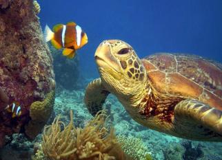 Essas simpáticas tartarugas se transformaram em personagens de livros infantis do fotógrafo Troy Mayne.  O objetivo é chamar a atenção para o problema da tartaruga verde, que diminui a cada ano. Confira!