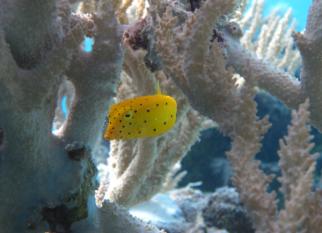 """O show do fundo do mar. As fotos são de """" Tuamotu"""" , uma cadeia de ilhas e atóis da Polinésia Francesa.  Confira!"""