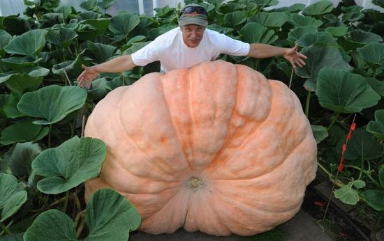 Verduras gigantes - Alaska1