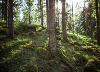 Uma série incrivel, que valoriza a relação entre a relação huma com a natureza. Confira!