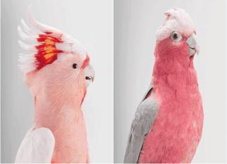 Incríveis fotos de páassaros de Leila Jeffreys, fotógrafa e  amante de pássaros. Confira!