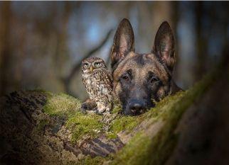 Um pastor alemão, uma coruja e uma boa amizade, Confira!