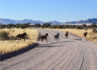 No deserto da Namíbia, esses cavalos selvagens fazem parte de uma das populações de cavalos mais isolados do mundo. Confira!