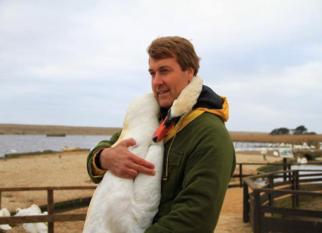 Os cisnes não são animais muito sociáveis, mas como os animais estão sempre nos surpreendendo ... Confira!