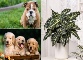 Cinco plantas que podem fazer mal para o seu cãozinho. Confira!