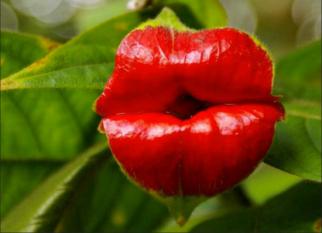 O nome é óbvio – Flor do Beijo. Confira!