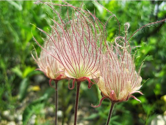 flor fumaça2