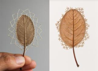 Folhas secas se transformam em delicadas esculturas criadas  pela artista  Susanna Bauer .