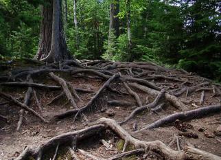 A linguagem silenciosa das árvores ... Confira!