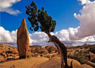 Joshua Tree, na terra há mais de dois milhões de anos,cercada de lendas e reverências é um exemplo da natureza de luta pela sobrevivência e capacidade de adaptação. Confira!