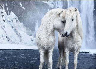O resultado de uma expedição à uma terra distante, a relação entre a neve e esses cavalos incríveis. Confira!