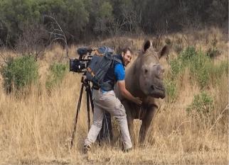 """Será que é uma boa ideia Coçar a """"barriguinha"""" de um rinoceronte?"""