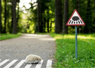 Agência Lituana cria sinais de estrada para ajudar a proteger animais em  um famoso parque em Vilnius.  Encantador! Confira!