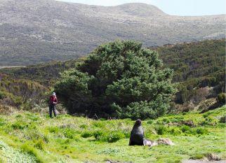 """A história da árvore, conhecida com a """"árvore mais solitária""""  do mundo. Boa história, confira!"""