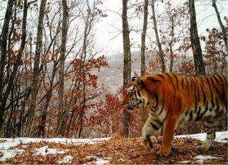 Campanha tem o objetivo de salvar esses lindos  e poderosos  animais, fundamentais para o equilíbrio dos ecossistemas em que habitam. Confira!
