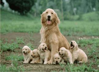"""""""Melhorar a qualidade de vida dos pets, respeitando o planeta."""" Tudo de bom! Confira!"""