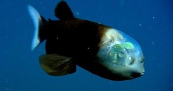 1 peixe transparente