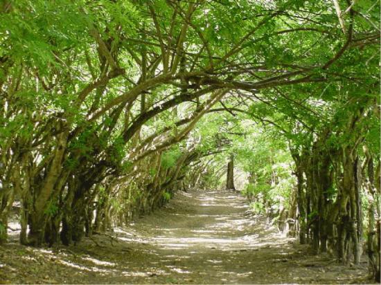 Trilha para a Praia de Bainema
