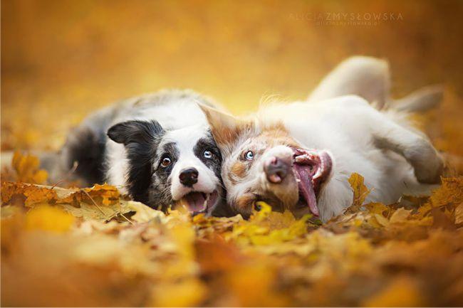 dogfoto4