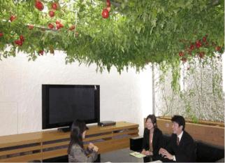 Na sede de uma empresa em Toquio, tomates crecem na recepção, ervas aromáticas  perfumam  as  salas de reunião... Confira!