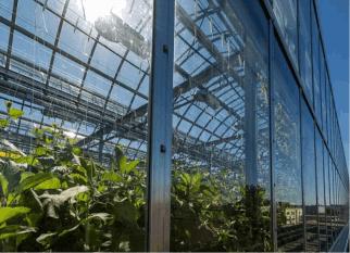 Estufas onde são cultivadas mais de 40 tipos de legumes , ficam em telhados  na cidade de Montreal (Canadá) . Confira!