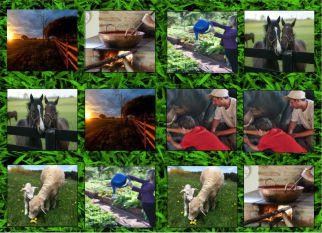 Vida na fazenda