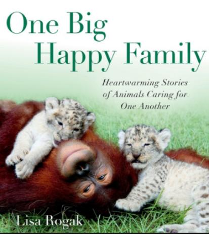 big family livro