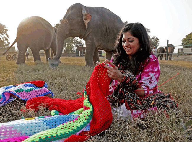 elefante trico 2