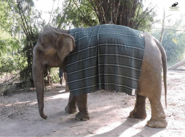 elefante trico 4