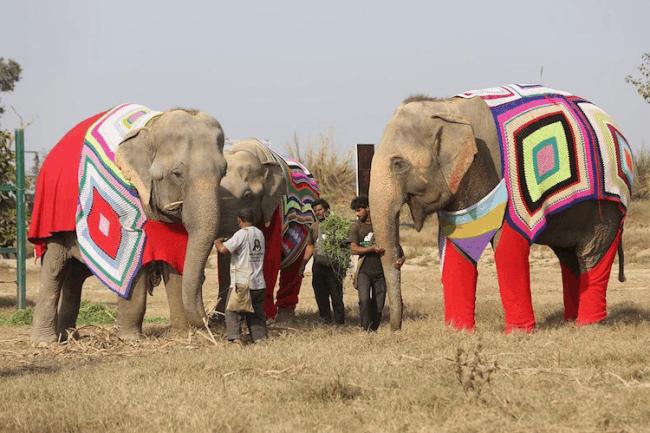 elefante trico 5