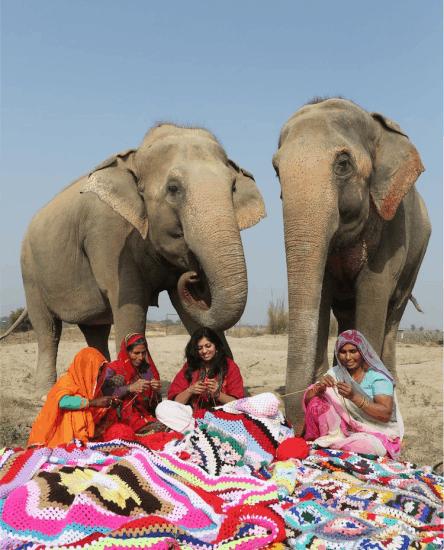 elefante trico 6