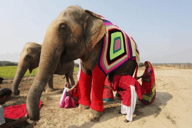 elefantetrico3
