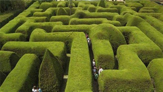 Labirinto de Lavandas