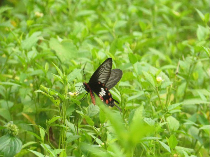borboleta solar1